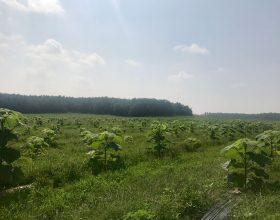 Valea lui Mihai August 2017