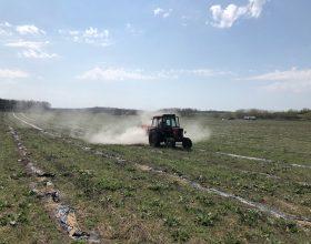 """Plantage """"Valea Lui Mihai"""" nach dem letzten Rückschnitt im Frühjahr 2018 – Kalzium für ein optimales Wachstum"""