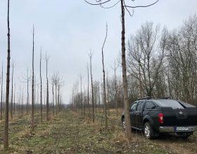 KiMaX Plantage im Frühjahr 2018 nach einem harten rumänischen Winter