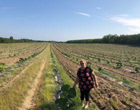 Plantage Valea Lui Mihai – Besuch der Geschäftsführung unseres Partners vor Ort