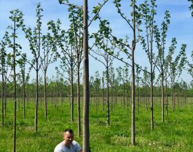 Frühling 2018 Plantage Sacadat